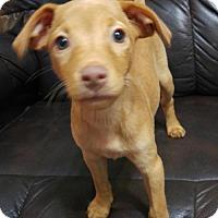 Adopt A Pet :: Friedrich - Maple Grove, MN