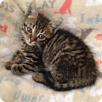 Adopt A Pet :: tiny Willow - Studio City, CA