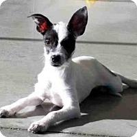 Adopt A Pet :: TULIP - Santa Clara, CA