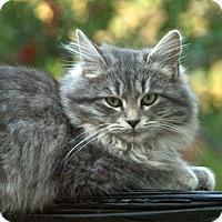 Adopt A Pet :: Asa - Lake Arrowhead, CA