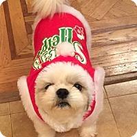 Adopt A Pet :: Bobo - Brooklyn, NY