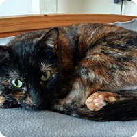 Adopt A Pet :: Abigail - Orange, CA