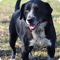 Border Collie/Australian Cattle Dog Mix Dog for adoption in Von Ormy, Texas - Bubba