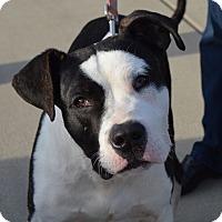 Adopt A Pet :: Buddy - CRANSTON, RI