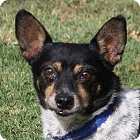 Adopt A Pet :: Cody - Edmonton, AB
