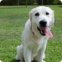 Adopt A Pet :: Strider - BIRMINGHAM, AL