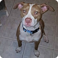 Adopt A Pet :: Frank - Greensboro, NC