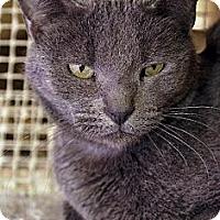 Adopt A Pet :: Tuki - Tucson, AZ