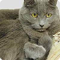 Adopt A Pet :: Mr. D - Pineville, NC