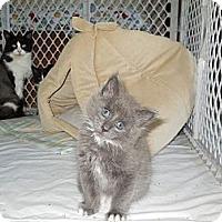 Adopt A Pet :: Gabe - CARVER, MA