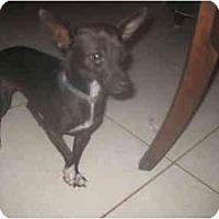 Adopt A Pet :: Minnie - Pembroke pInes, FL