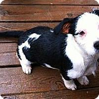 Adopt A Pet :: Sancho - Maysel, WV