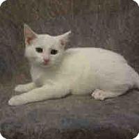 Adopt A Pet :: Daphne - Arlington, VA