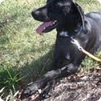 Adopt A Pet :: Bobbie - Lewisville, IN