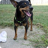 Adopt A Pet :: Duke - Baton Rouge, LA