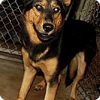 Adopt A Pet :: Zena - Savannah, MO