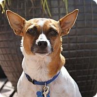 Adopt A Pet :: Fefe - San Francisco, CA
