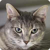 Adopt A Pet :: Cinnabon - Chicago, IL