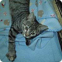 Adopt A Pet :: Dana - Medina, OH