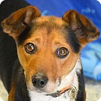 Adopt A Pet :: Lyla - Huntley, IL