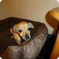 Adopt A Pet :: Teenie - Wyanet, IL