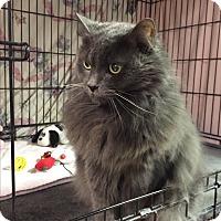 Adopt A Pet :: Emilina - Plainville, MA
