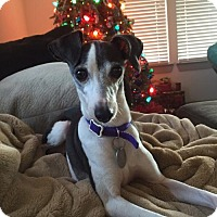 Adopt A Pet :: Julia - Richardson, TX
