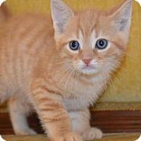 Adopt A Pet :: U Litter - Milo - Williamston, MI
