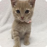 Adopt A Pet :: Jabba - Mission Viejo, CA