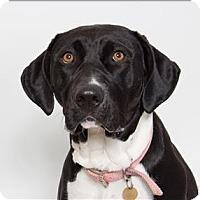 Adopt A Pet :: Pepper - San Luis Obispo, CA