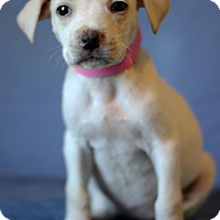 Adopt A Pet :: Demi - Waldorf, MD