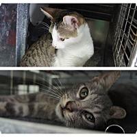 Adopt A Pet :: Mickey & Max - Henderson, NC