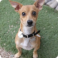 Adopt A Pet :: Fast Freddie - Phoenix, AZ