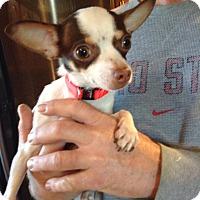 Adopt A Pet :: Atom - Ashville, OH