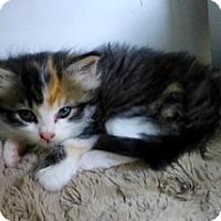 Adopt A Pet :: Snuggles - Waxhaw, NC