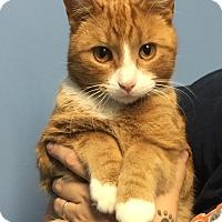 Adopt A Pet :: KAHN - Hibbing, MN
