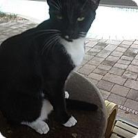 Adopt A Pet :: Bucky - Ft. Lauderdale, FL