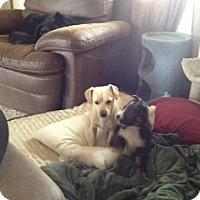 Adopt A Pet :: Daisy - Seattle, WA