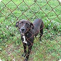 Adopt A Pet :: Molly - Conyers, GA