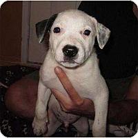 Adopt A Pet :: Stromboli (adoption pending) - Phoenix, AZ
