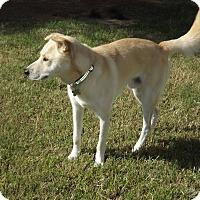 Adopt A Pet :: Cosmos - Phoenix, AZ
