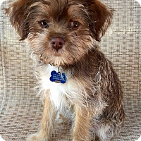 Adopt A Pet :: Sammy - Encino, CA