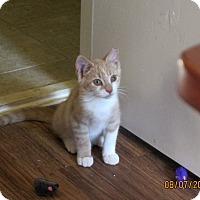 Adopt A Pet :: Wilbur Wright - Kirkwood, DE