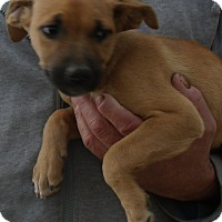 Adopt A Pet :: GABY - Corona, CA