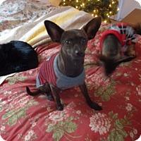 Adopt A Pet :: Cookie - Only $75 adoption! - Litchfield Park, AZ