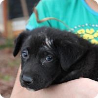 Adopt A Pet :: Jake - Harmony, Glocester, RI