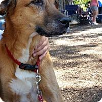 Adopt A Pet :: Maggie - Surrey, BC