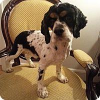 Adopt A Pet :: Leno - Edgewater, NJ