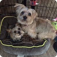 Adopt A Pet :: Zoey & Mr. Big - N. Babylon, NY