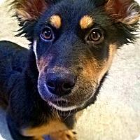 Adopt A Pet :: Sable - Nashville, TN
